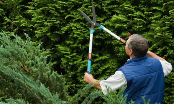 Ζητείται γεωπόνος ή έμπειρος κηπουρός από τεχνική εταιρία πρασίνου στον Κόκκινο Μύλο