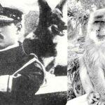 ΑΛΕΞΑΝΔΡΟΣ Α': Ο τραγικός του θάνατος από το δάγκωμα μιας μαϊμούς στο Τατόι